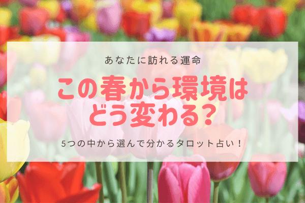 【あなたに訪れる運命】この春から環境はどう変わる?5択タロット占い
