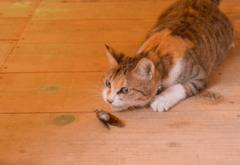 「はいどうぞ!」毎朝飼い猫がとってきてくれる<アレ>とは一体…?